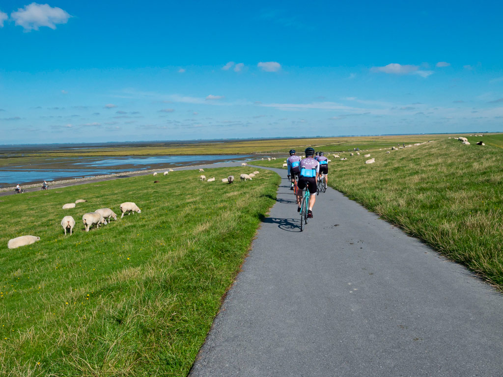 TdS 2 Stage - North Sea and sheeps
